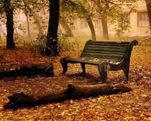 autumn_47